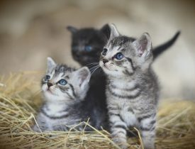 cat-3535399_1920