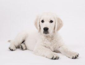 dog-2655469_1920