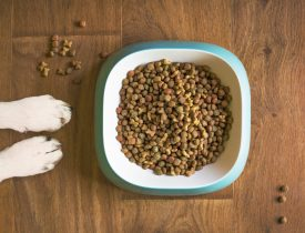 dog-food-5168940